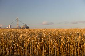 corn futures market